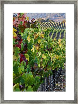 Alexander Valley Vineyard Framed Print