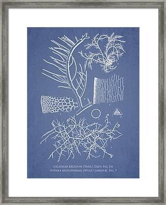 Algae Framed Print by Aged Pixel