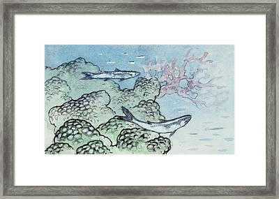 Algae And Corals Framed Print by Deagostini/uig