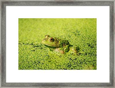 Algae Covered Frog Framed Print by Optical Playground By MP Ray