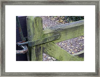 Algae On Timber Surface Framed Print by Sheila Terry