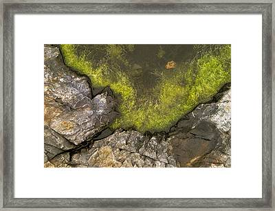 Algae Pool Abstract Photo Framed Print by Peter J Sucy