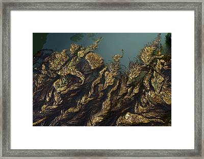 Framed Print featuring the digital art Algae by Ron Harpham