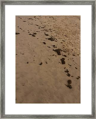 Algae Trail In The Sand Framed Print by Sandra Pena de Ortiz
