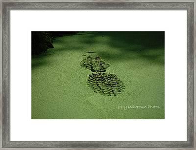 Algaegator..... Framed Print by Jerry Robertson