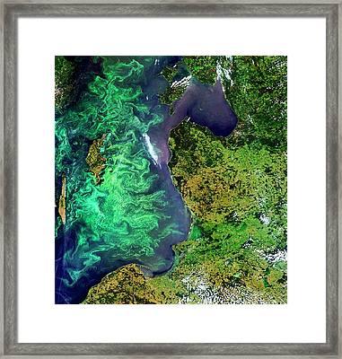 Algal Blooms Framed Print by European Space Agency