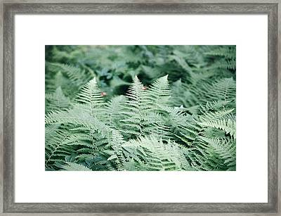 Framed Print featuring the photograph Algonquin Ferns by David Porteus