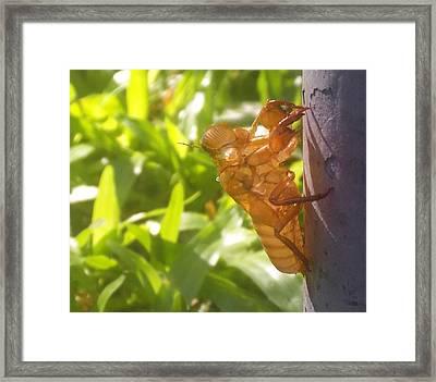 Alien Bug Framed Print