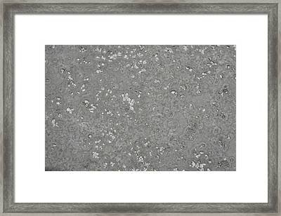 Alien Landscape Framed Print by Denver Lukas