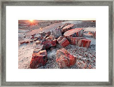Alien Landscape, Petrified Logs Framed Print