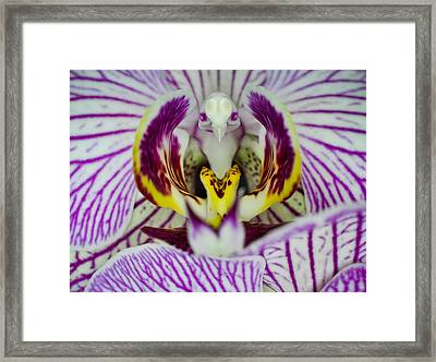 Alien Moth Orchid Framed Print by Kevin Munro