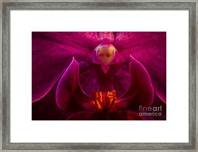 Alien Orchid Framed Print by Mitch Shindelbower