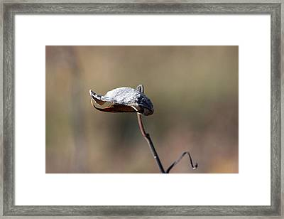 Alien Seed Pod? Framed Print by Kevin Snider
