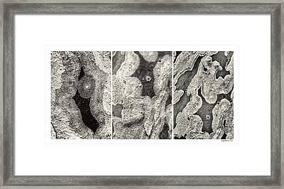 Alien Triptych Landscape Bw Framed Print