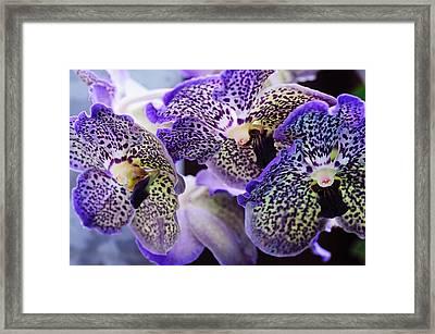 Aliens. Orchids From Keukenhof. Netherlands Framed Print by Jenny Rainbow