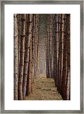 Aligned Framed Print by Paul Noble