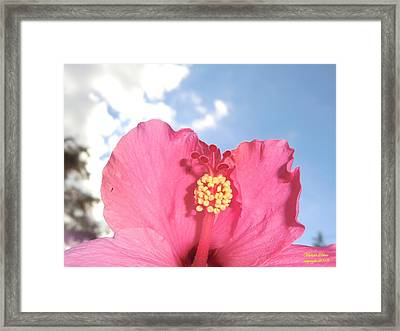Blissful 33 Framed Print