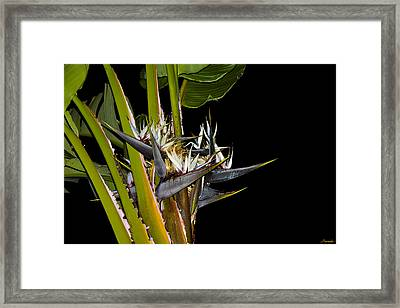 Alive In Darkness Framed Print by Renee Anderson