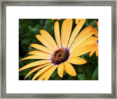 All A Glow Framed Print by Bruce Bley