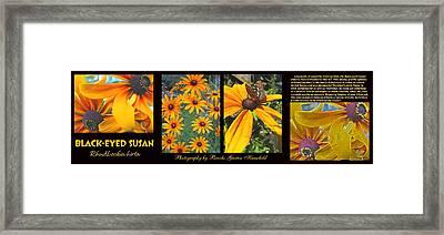 All About Black-eyed Susans Framed Print by Brooks Garten Hauschild