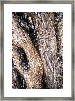 All About Textures Framed Print by Natache  DOyen