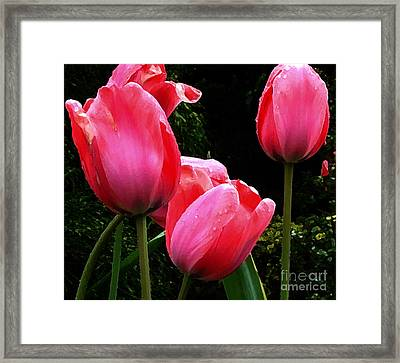 All About Tulips Victoria Framed Print by Glenna McRae