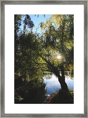 All Aglow Framed Print