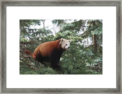All Alone Framed Print by Judy Whitton