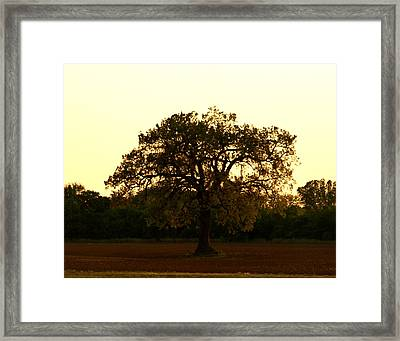 All Alone Framed Print