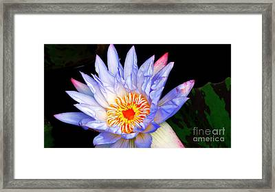 All American Water Lily Framed Print by Rob Luzier