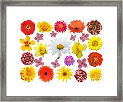 All Beauty Flower Closeup Framed Print by Boon Mee