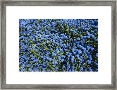 All Blue Framed Print by Svetlana Sewell