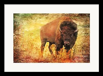 Buffalo Extinction Framed Prints