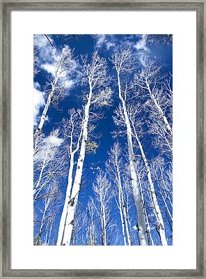 All But Gone Framed Print by The Forests Edge Photography - Diane Sandoval