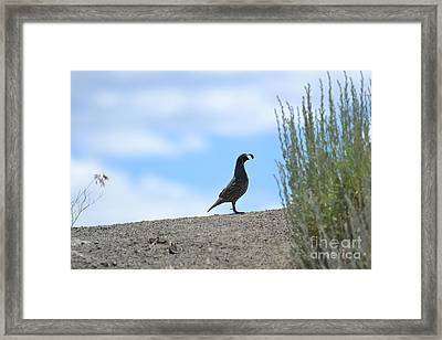 Framed Print featuring the photograph All Clear by Laurianna Taylor