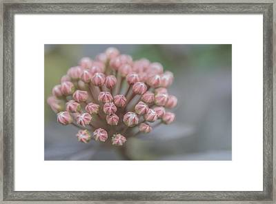 Framed Print featuring the photograph All Dressed In Pink And White by Jacqui Boonstra