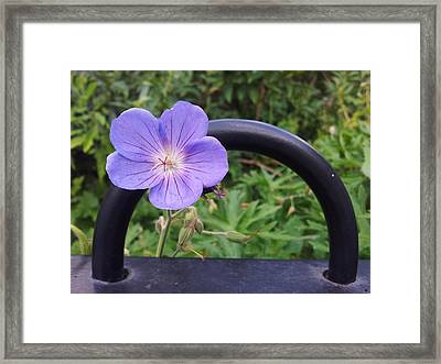 All Dressed Up And Nowhere To Go Framed Print by Isabella F Abbie Shores FRSA