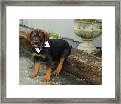 All Dressed Up Nowhere To Go Framed Print by Kenny Francis
