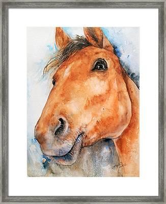 All Ears_ Horse Portrait Framed Print