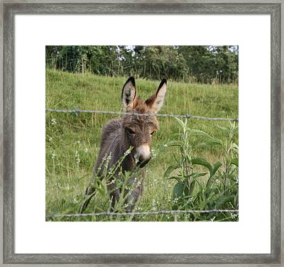 All Ears Framed Print by Terry Scrivner