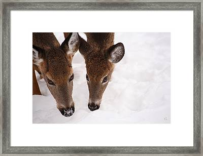 All Eyes On Me Framed Print by Karol Livote