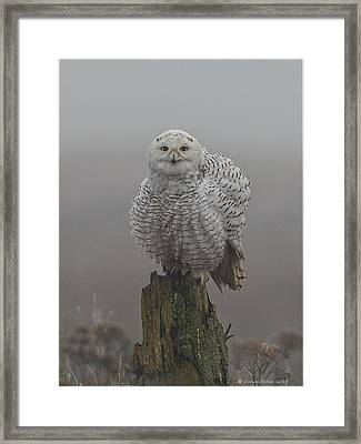 All Fluffed Up Framed Print by Daniel Behm