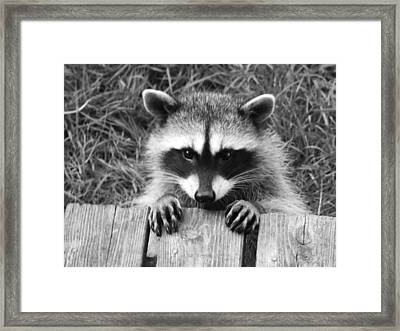 All Hands On Deck Framed Print by Kym Backland