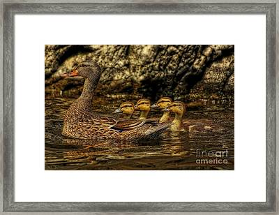 All Her Ducks In A Row Framed Print by Marjorie Imbeau