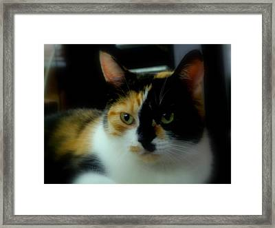 All I Ask Of You Framed Print