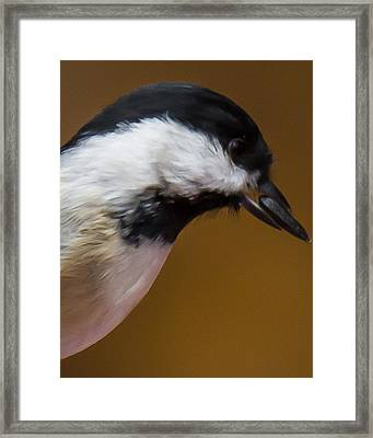 All I Need Is One Framed Print by Robert L Jackson