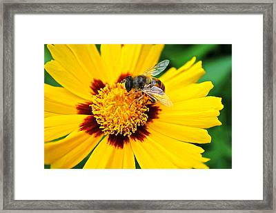 All In A Days Work Framed Print by Frozen in Time Fine Art Photography