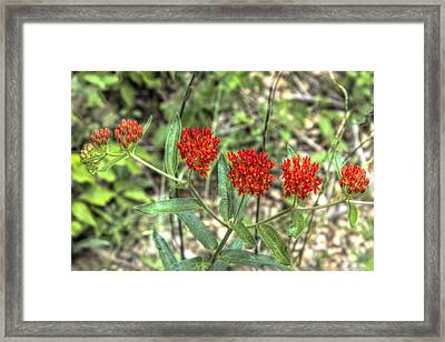 All In A Row Framed Print by Honour Hall