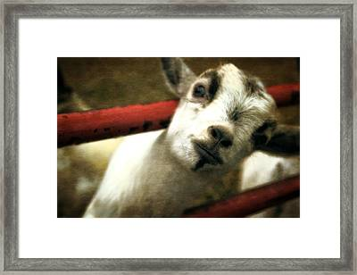 All In The Attitude Framed Print
