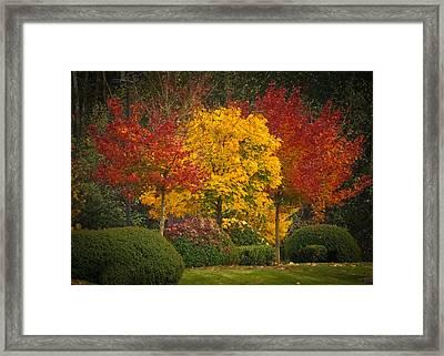 All Lit Up Framed Print by Ronda Broatch